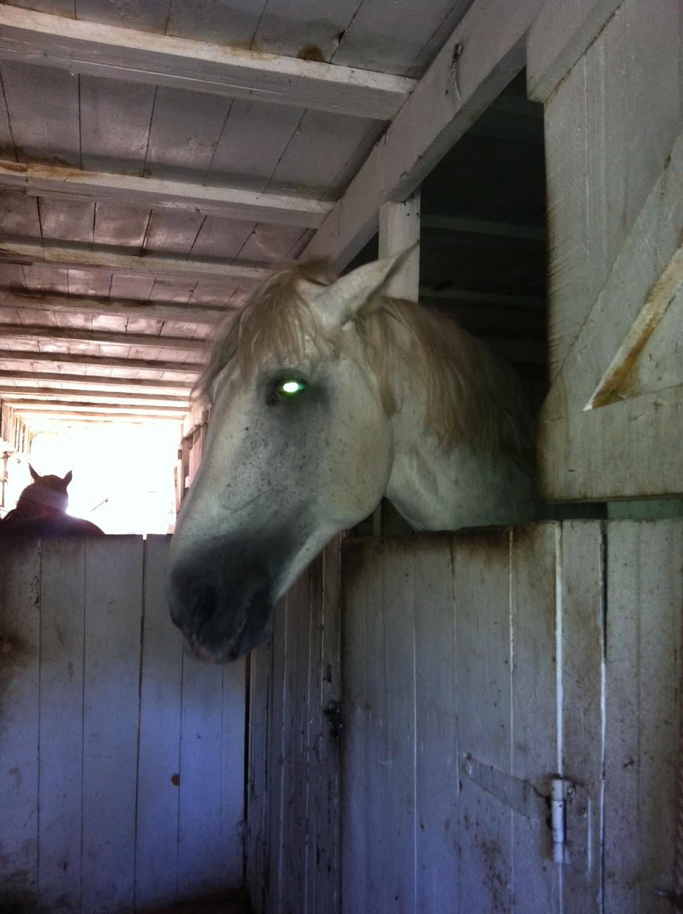 что нужно сделать чтоб у коня втал член рассказ